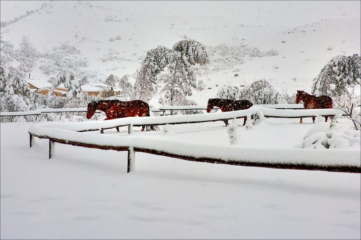 Feral horses at the Drakensberg Mountain Retreat, July 2011. Was commissioned to take photographs of the retreat and surroundings when a freak snow storm trapped us in for four days. This shot just begged to be made