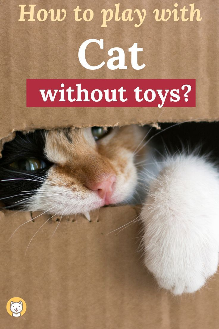 How To Play With Cats Without Toys Check Out Some Exciting Games Now In 2020 Diy Cat Toys Cats Cat Toys