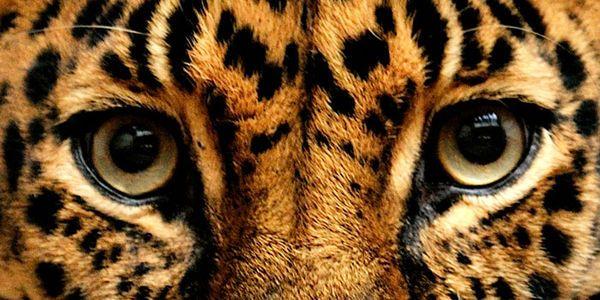 US Forest Service - Protect Arizona Jaguar Habitat from Canadian Mining Interests