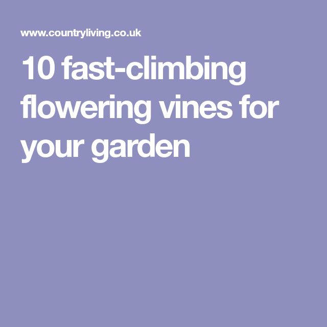 10 fast-climbing flowering vines for your garden