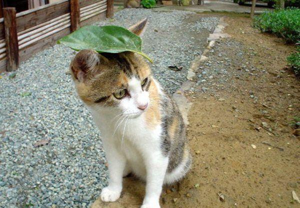 Poze cu pisici haioase (2)