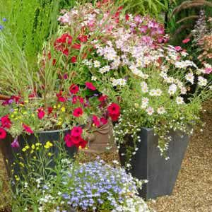 Full sun zone 5 container gardens combine petunias verbena coleus and miniature roses be - Container gardens for sun ...