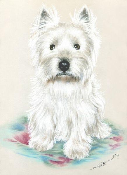 Irina Garmashova-Cawton - Artiste Peintre Animalier - Spécialiste des Peintures et Portraits Félins - Couleurs - Chien Scott Terrier