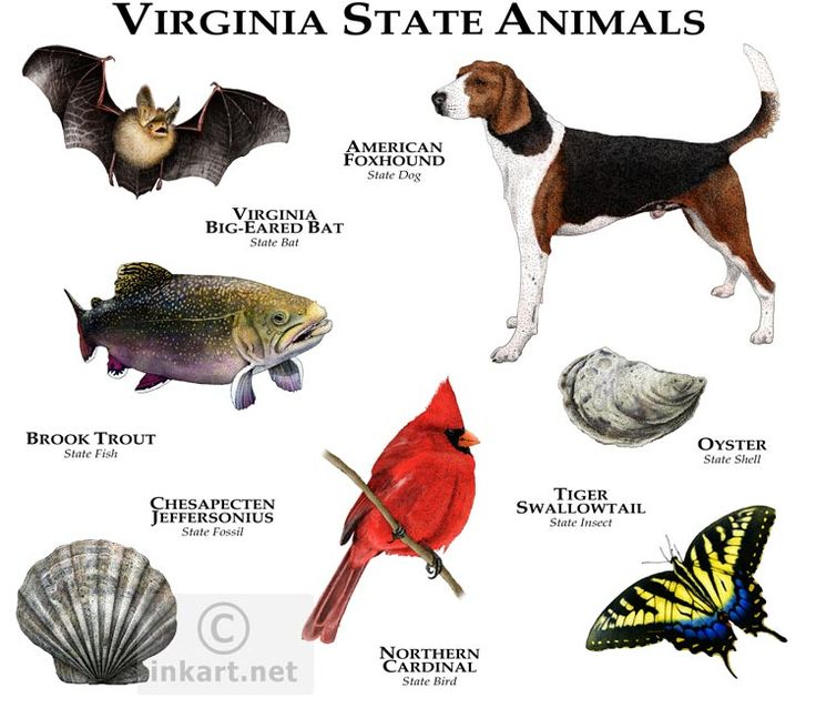 Best Us States Virginia Images On Pinterest Virginia - Va which state in usa