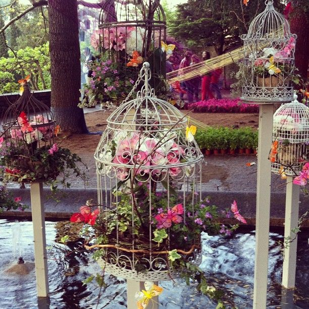 "mangelsmar foto ""Flors engabiades a #tempsdeflors"""