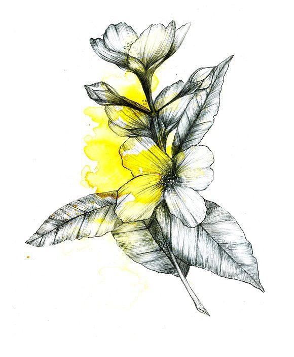 Jasmine Flower Sketch Illustration   Flower sketches ...