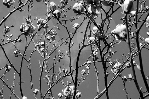 Photograph Art Black and White Photography by AbbieandPabbie, $35.00