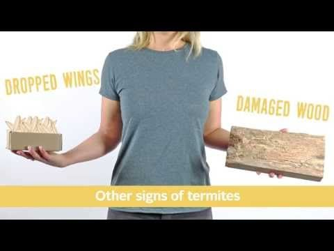 Difference Between Flying Ants vs. Termites: Pest Video