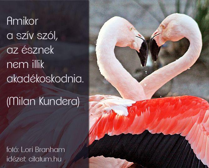 Milan Kundera idézet a szív szólításáról.