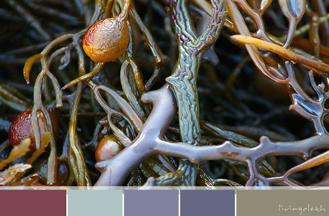colour palettes | livingcloth.com - finding inspiration in creating colour palettes from my own images x