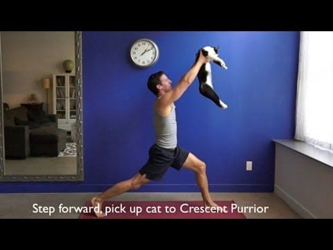 """""""How to Do Yoga With Your Cats."""" This is pretty funny. I know my cat would just attack me if I tried this"""