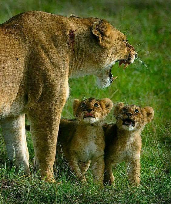 Фото животные с надписями