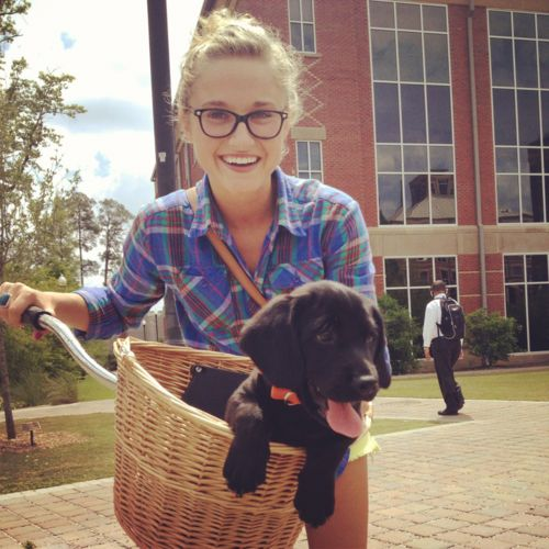 college style :)Nice People, Dogs Puppies, Bikes Riding, Baskets, Labs Puppies, Beach Cruiser, Black Labs, Animal, Golden Retriever Puppies