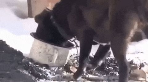 We have the best gifs in the Internet