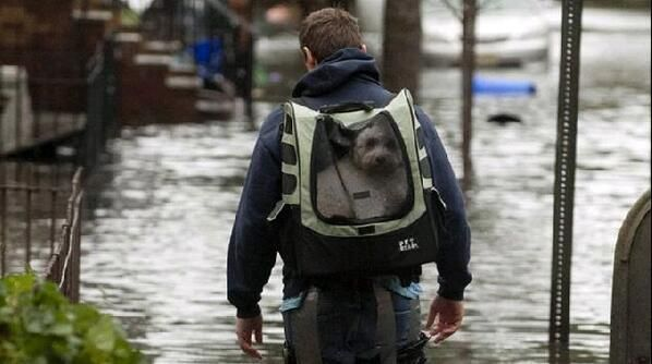a dog avoids the flooded streets by taking a ride in a backpack