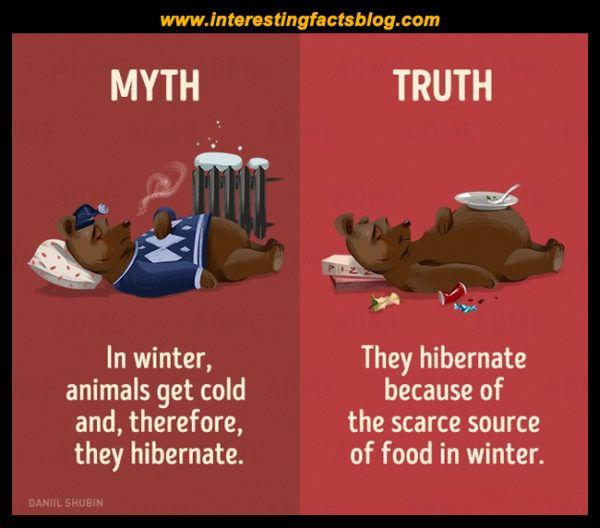 Myths About Animals Hibernation