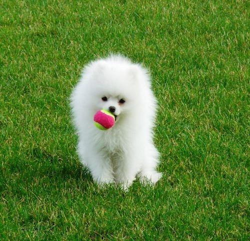 so cute: White Pet