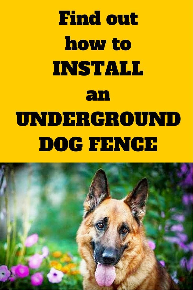 how to install an underground dog fence find out the tips and tricks that will