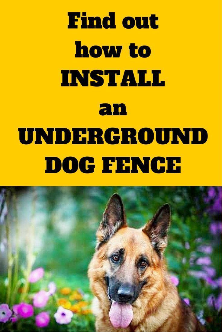 Die besten 20 Invisible Fence Ideen auf Pinterest