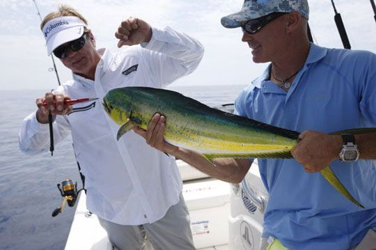 Dolphin fishing in the florida key by george poveromo for Dolphin fishing florida