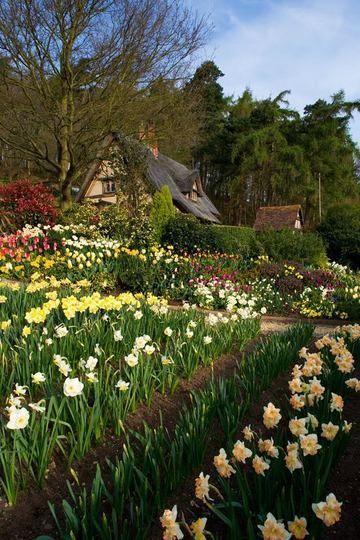 Tulipanes narcisos y jardines de primavera jard n de for Jardines de primavera