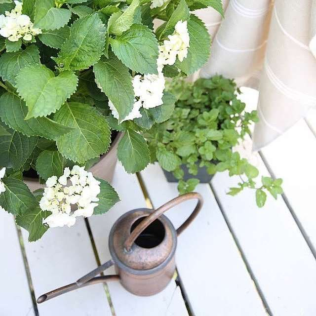 Plant these 12 beautiful plants that repel mosquitos in your yard for a natural alternative to bug s... - Julie Blanner