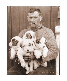 Tom Crean with Huskie Puppies  WW2. Frank Hurley. Country of Origin:  Australia