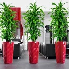 In most of the corporate companies and homes indoor plants are used for decoration.