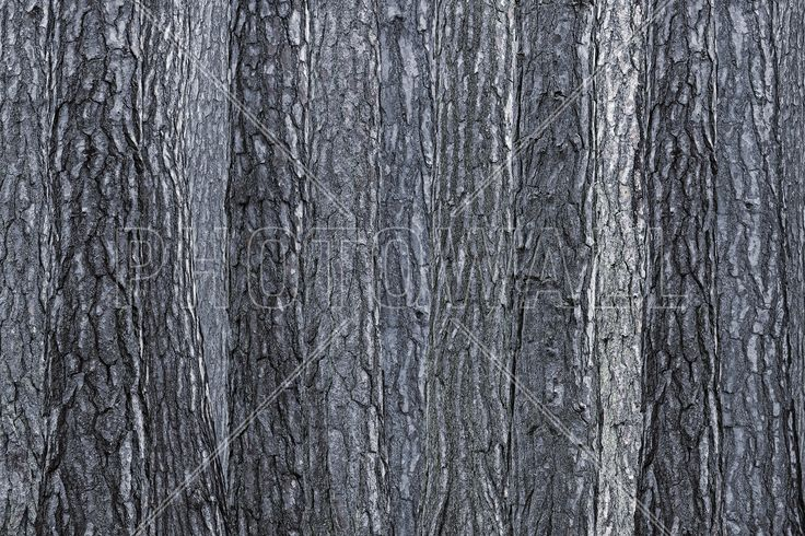 Black Blue Bark - Wall Mural