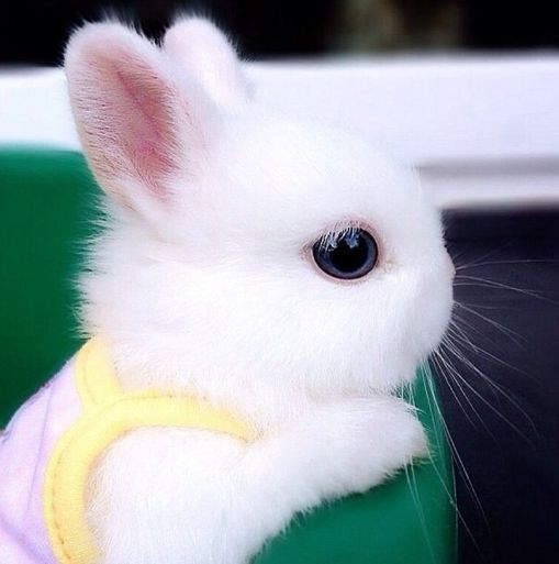 Cute White Baby Rabbit wallpapers |Awesome Baby White Bunnies