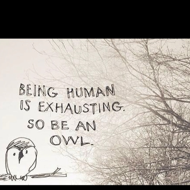 Life, Inspiration, Exhausted, Quotes, Random, Funny, Things, Hoot, Owls