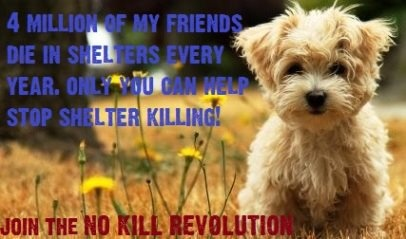 Can You Return Revolution For Dogs On Cats