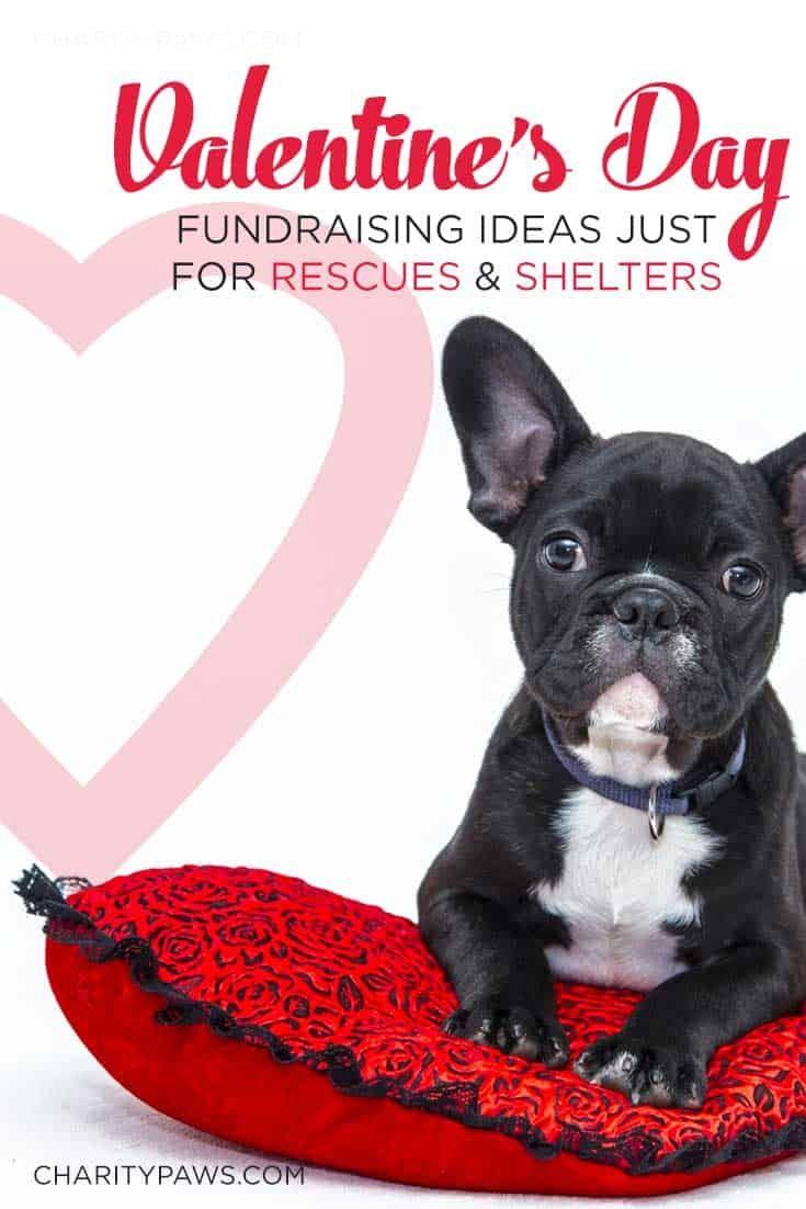 Valentine S Day Rescue Fundraiser Ideas Animal Rescue