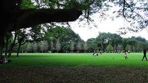 parque Ibirapuera - Pesquisa Google