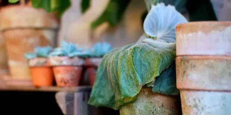 SKØNNE OG SKÆVE PLANTER - Cool plants for the home