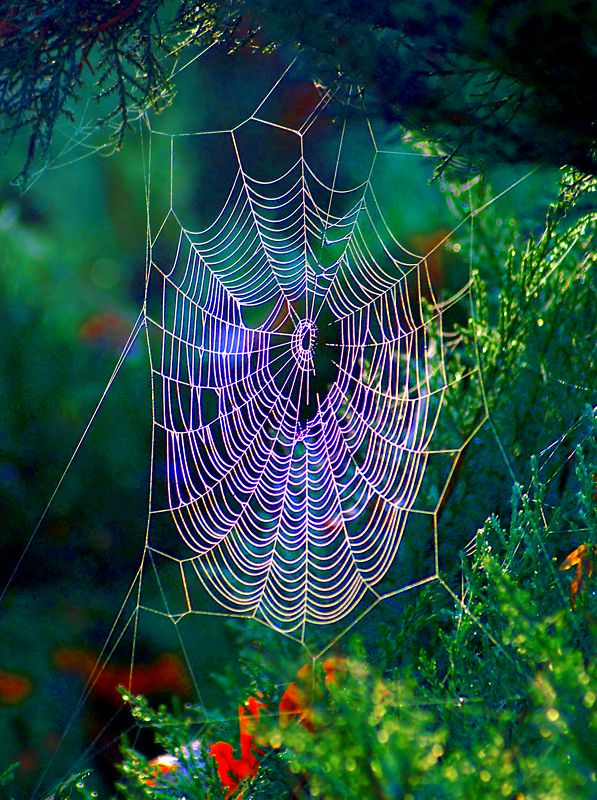 Spider web with stunning rainbow prismatic light
