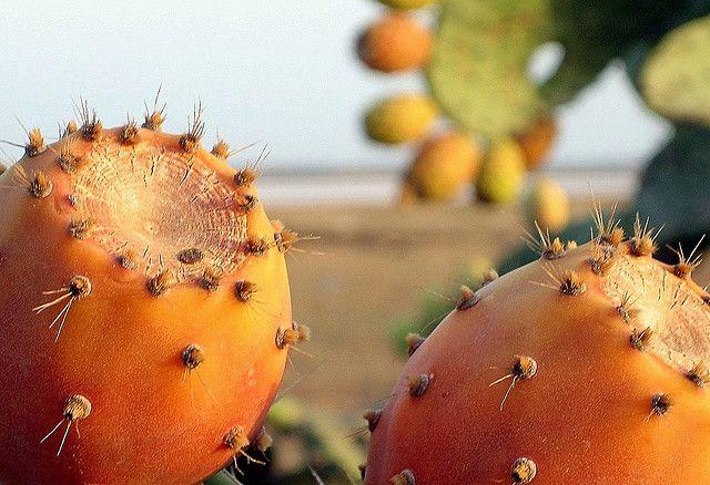 سلطان الغلة  هرقلة / تونس Figue de Barbarie Opuntia ficus-indica (famille des Cactaceae)  Figues de Barbarie, (en français), hendi ( en dialecte tunisien ) :fruit qu'on n'arrête pas de savourer .  Ce fruit, est surnommé « le roi des fruits » ( Soltan http://figue-de-barbarie.blogspot.co.at/2013/08/la-figue-de-barbarie-un-remede-miracle.html