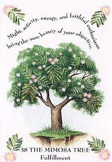 Tree Magic - Mimosa    Gipsy Magic...... http://gypsymagicspells.blogspot.nl/search/label/Tree%20Magick  Also a lot on Tree lore...