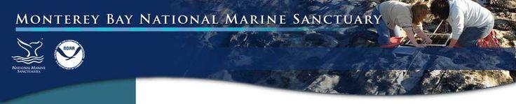 Monterey Bay National Marine Sanctuary Exploration Center / FREE / Santa Cruz / 35 Pacific Ave