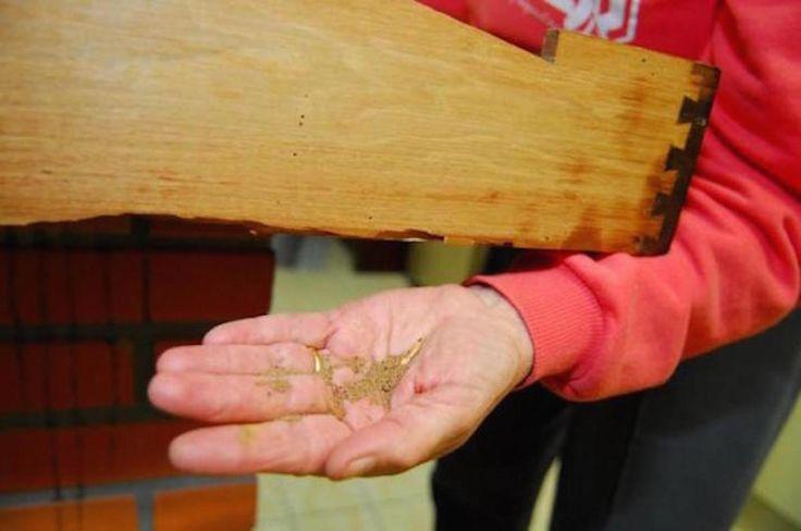 De olho nos cupins  Se você notou um pozinho próximo aos móveis, acompanhado de resquícios de asas de insetos, é sinal que há cupim por perto. Eles se alimentam de celulose, destroem madeira, papel, papelão e até alguns tipos de tecidos, como o algodão. Pequenas, algumas espécies se deslocam facilmente em busca de abrigo e alimento, podendo infestar um imóvel inteiro. Por ter grande poder de destruição, os cupins estão entre as pragas que mais causam prejuízos em ambiente urbanos.  …