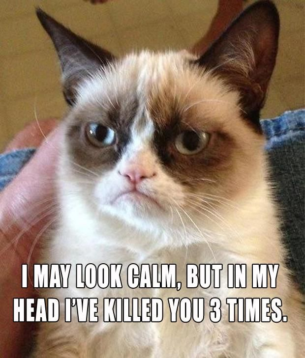 """The Best Of """"Angry Cat"""" – 15 Pics"""