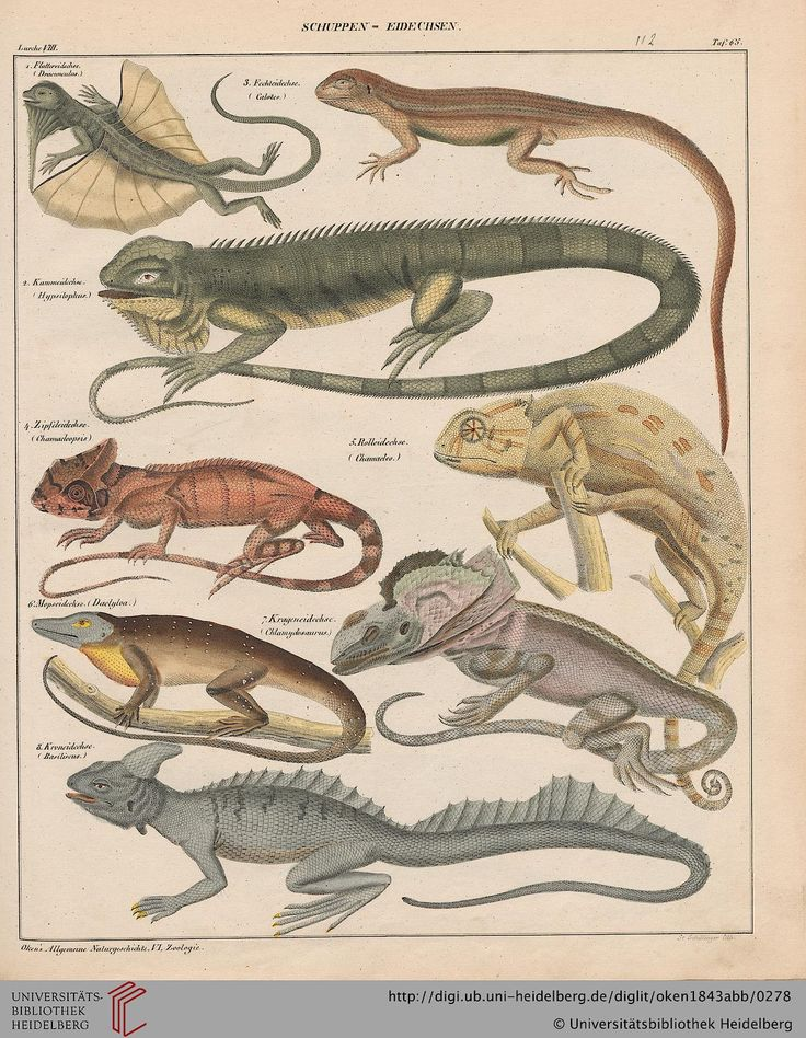 General Natural History: For all classes, Lorenz Oken ...