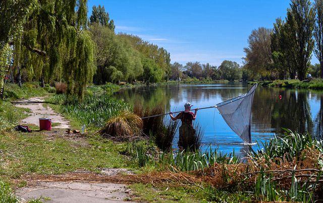 Whitebait fishing Christchurch New Zealand