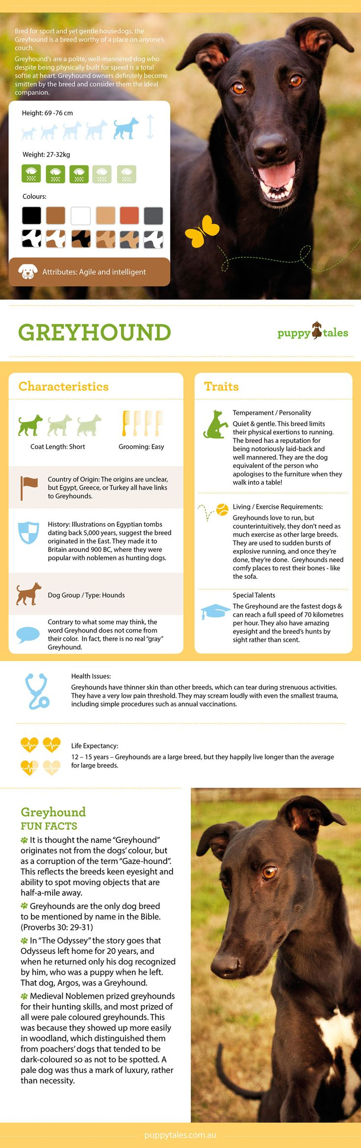 Greyhound Breed Profile & Style File on Puppy Tales
