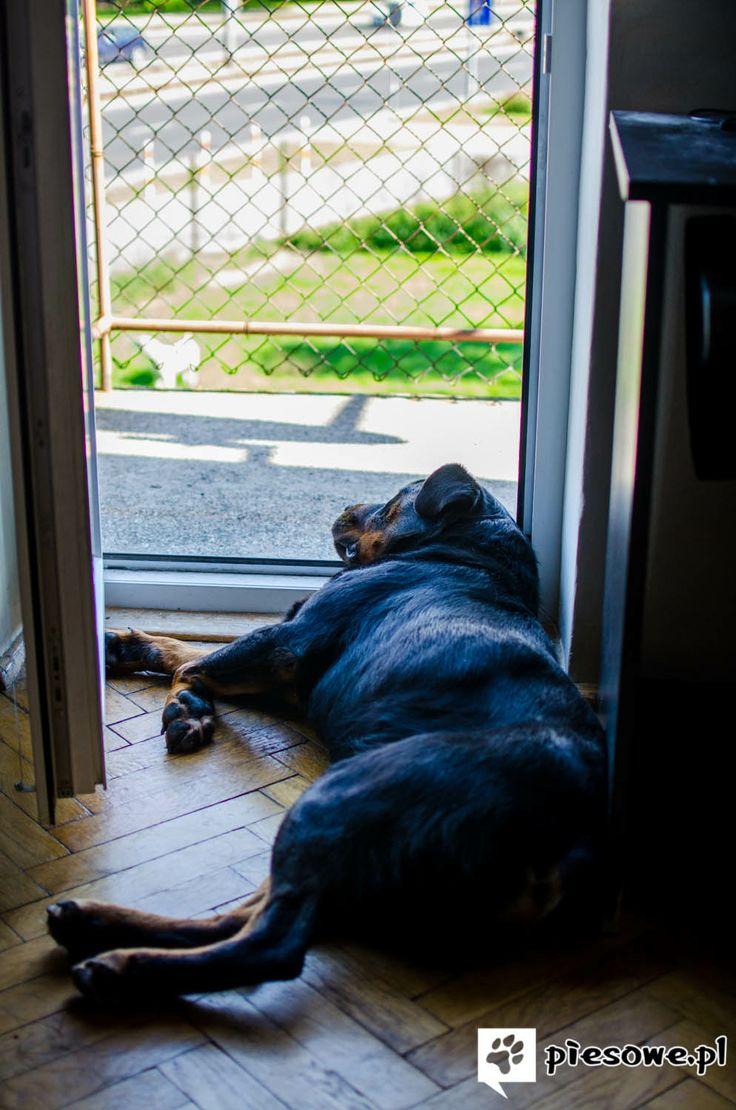 Leniwe psiaki w upalny dzień. Nie tylko nam ludziom mniej się chce w takie dni.