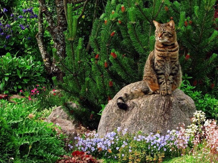 13 best Cat friendly garden images on Pinterest Landscaping