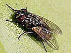 DIY - How to Keep Flies Away Outdoors
