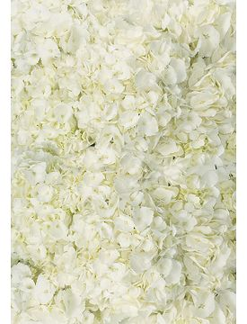 Wedding party flowers (Bridal bouquet): White hydrangea.