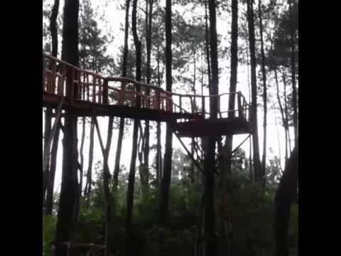 Hutan Pinus Pengger Cantiknya Panorama Hutan di Yogyakarta - Yogyakarta