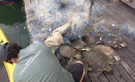 Tartarugas marinhas são encontradas mortas em rede de pesca em Vitória